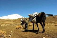 Mt.Ararat (5,137 masl), Turkey - Porters with horses